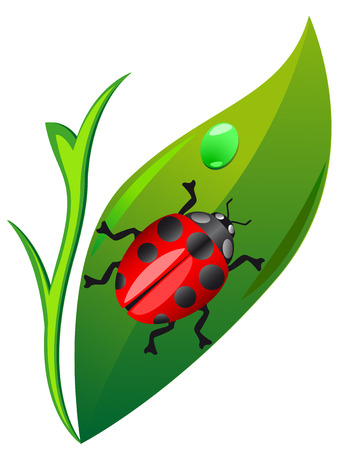 ladybird on leaf isolated on white background vector illustration Stock Vector - 6111267