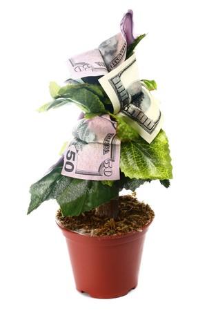 �rbol de dinero aislado sobre fondo blanco
