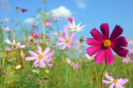 bloemen op naar de weide