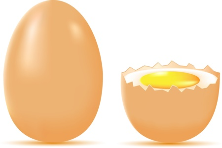 egg illustration isolated on white background