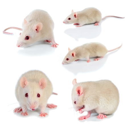 mouse isolated on white background Stock Photo