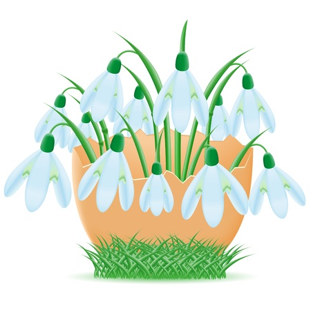 snowdrops are in egg shell vector illustration isolated on white background illustration