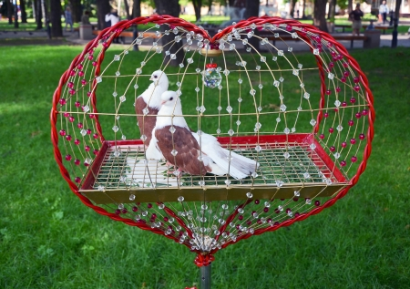 aviary: two doves in a cage on the nature