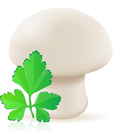 champignon: mushroom champignon illustration isolated on white background