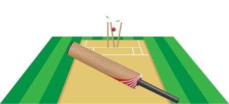 cricket stump: cricet illustration isolated on white background
