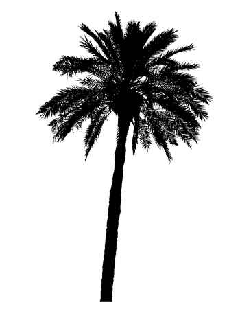 palmetto: silhouette of palm trees realistic vector illustration isolated on white background