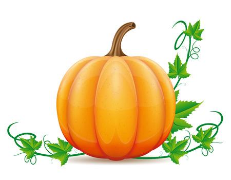 pompoen en blad vector illustratie geïsoleerd op een witte achtergrond