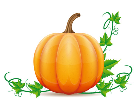 cornucopia: pumpkin and leaf vector illustration isolated on white background