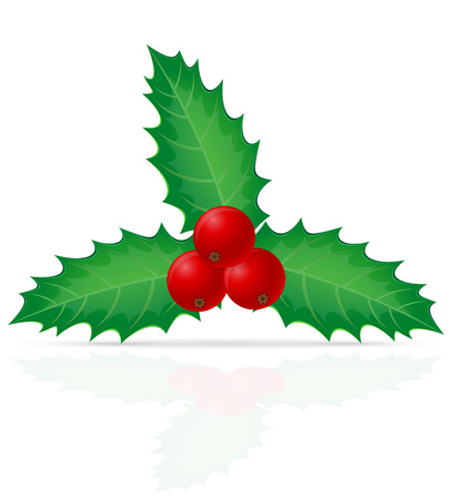 christmas three: christmas holly berry vector illustration isolated on white background Stock Photo