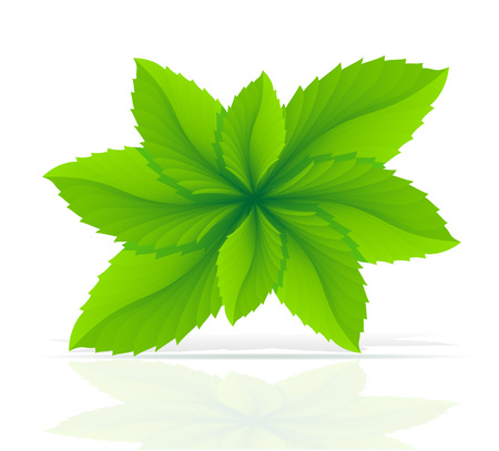 mint: abstract mint leaves vector illustration isolated on white background