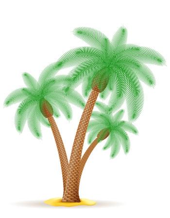 tree isolated: palm tree illustration isolated on white background