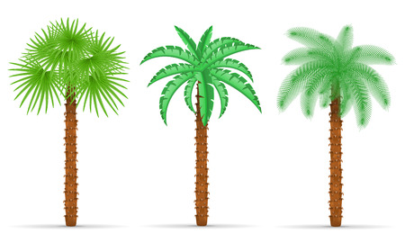 palm tree vector: palm tree vector illustration isolated on white background