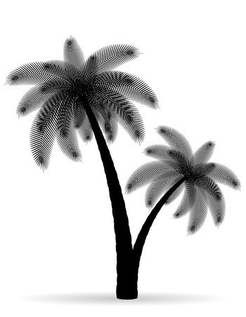 tree isolated: palm tree black outline silhouette illustration isolated on white background