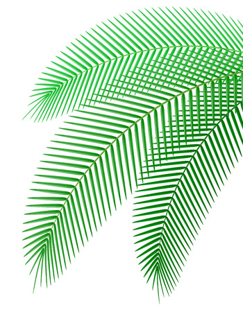 palm branch: palm branch illustration isolated on white background