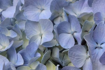 Violet Spring Blossoms