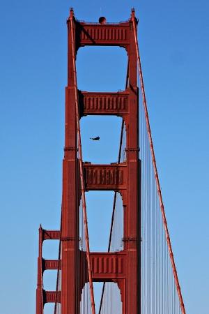 san francisco golden gate bridge: San Francisco Golden Gate Bridge with Hawk Flying Near Tower