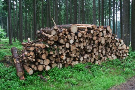 Trees stacked on a pile along a path.