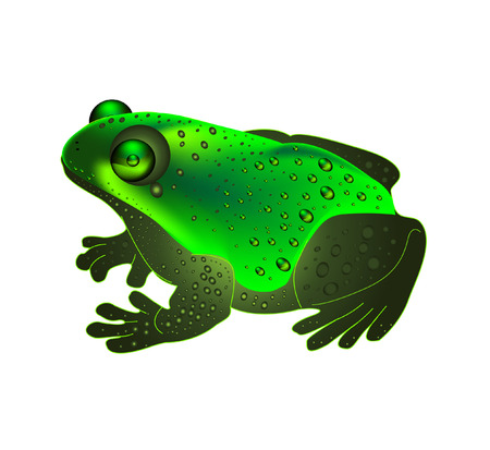 webbed: a beautiful green frog on white background (mesh)