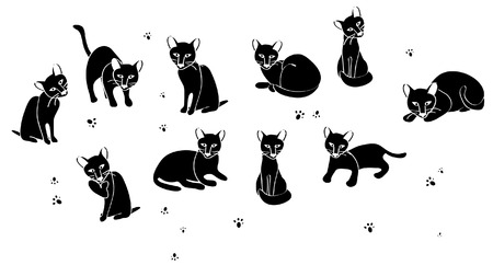 tabby cat: set of different black cats on a white background