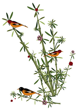 lovely birds in the bamboo forest, eating delicious fruit Vector