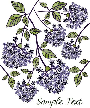 ramas de lilas fragantes sobre un fondo blanco