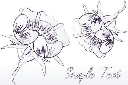 beautiful flowers on a white background Stock Vector - 7800266