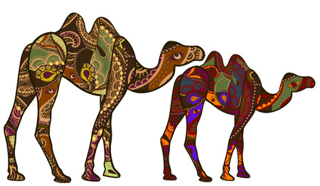 Camels in the ethnic style of the various elements on a white background