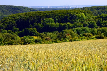 copse: Landscape with rye and barley field and forest in the distance city Saarlouis, summer, by Honzrath, Saarland   Germany
