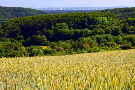 saarlouis: Paisaje con campo de centeno y la cebada y el bosque a lo lejos la ciudad Saarlouis, verano, por Honzrath, Saarland Alemania