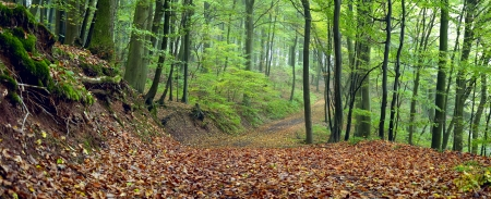 Dirt road in the mixed forest (beech, oak and hornbeam) in a misty day, autumn, Saarland  Germany. Stitched Stock Photo