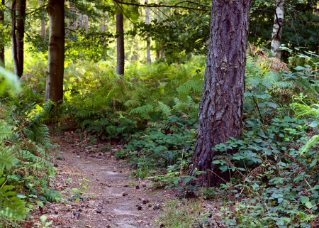 Footpath in the mixed forest in a sunny day, summer, SaarlandGermany Stock Photo