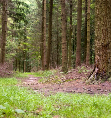 saarland: A footpath in the mixed forest in a sunny day, summer, Saarland  Germany