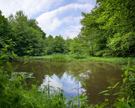 View of a small pond in the forest, summer,XXL, Saarland / Germany Standard-Bild