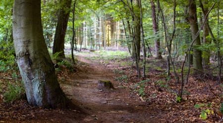 Footpath in the mixed forest in a sunny day, summer, Saarland  Germany, panorama - stitched photo