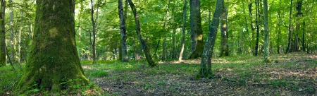 A view of the deciduous forest by Beckingen, Saarland / Germany. Panoramic