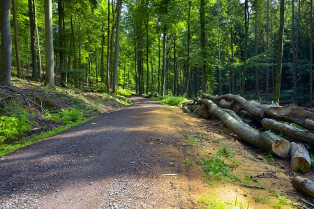 saarland: A dirt road in the mixed forest (beech, oak and alder), summer, by Beckingen, Saarland  Germany,