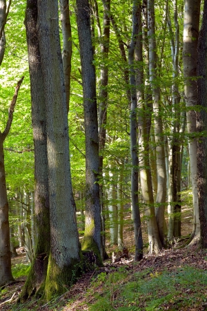 saarland: Mixed forest by Beckingen, Saarland   Germany Stock Photo