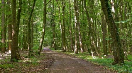 saarland: Dirt forest road by Beckingen, Saarland   Germany