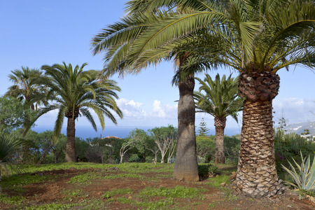 non la: Park by small city La Puntilla, Tenerife, Canary Islands, Spain.