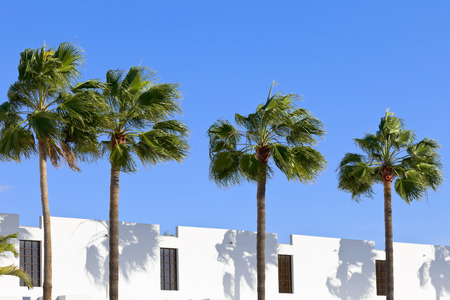 adeje: Palm trees in front of the building n city Costa Adeje, Tenerife, Canary Islands, Spain.