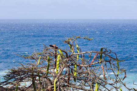 adeje: View of Atlantic Ocean in Costa Adeje , Tenerife, Canary Islands, Spain.