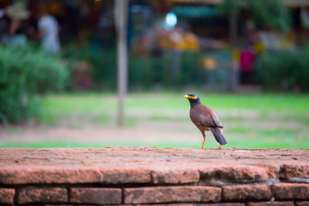 thrush: Thrush bird with prey sitting on the brick wall. Stock Photo