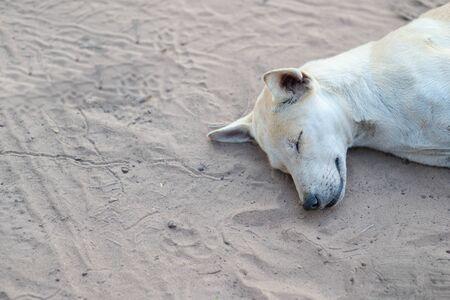Stray dog is sleeping on the ground. Stock Photo