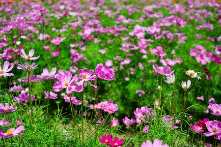 Colorful and beautiful flower garden