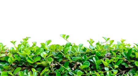 lens flare: Arbusto recinzione naturale su Lens Flare