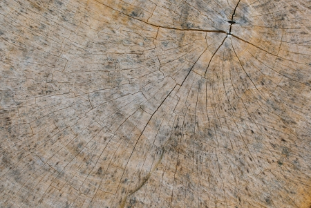 Wooden texture top view of a tree stump  photo