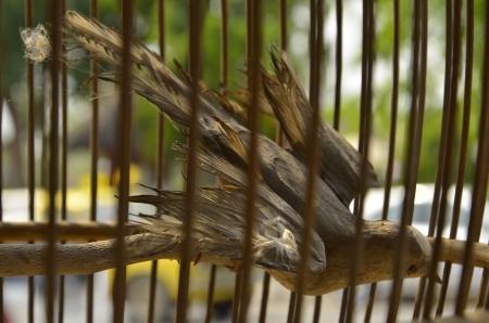 strangeness: bird stuff  in cage  Stock Photo