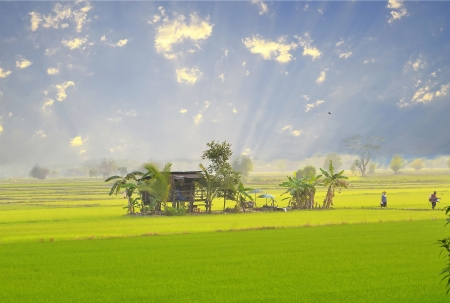 lifestyle of farmer thai in the evenning go back home