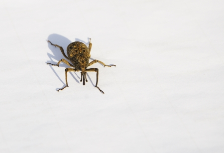 organisms: Weevil isolated on white background Stock Photo