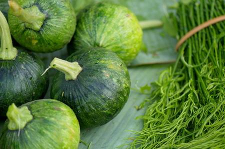 Green tender pumpkins. 写真素材